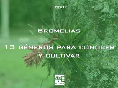 13 géneros de bromelias para conocer y cultivar