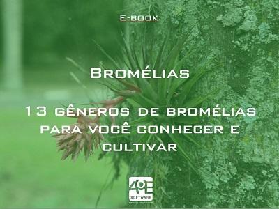 13 gêneros de bromélias para você conhecer e cultivar